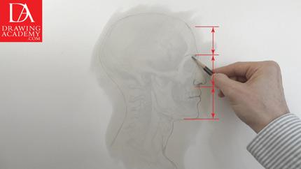 Anatomy in Art