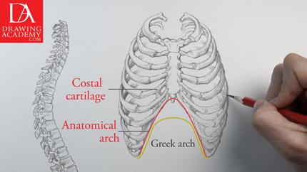 Bones in the Human Body