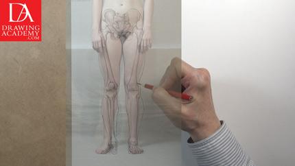 Leg Bones