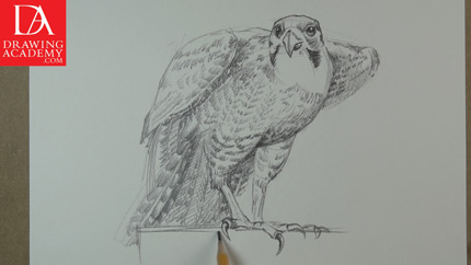 Drawing a Bird